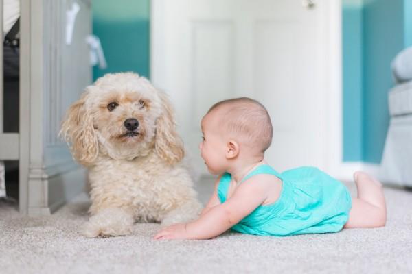 Bambini e animali domestici: una sana amicizia.